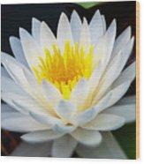 Lotus Gold Wood Print