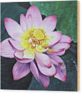Lotus With Dragonfly Wood Print
