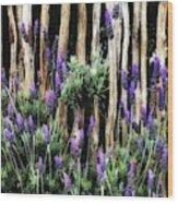 Love Of Lavender Wood Print