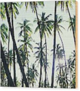 Low Angle View Of Coconut Palm Trees Wood Print
