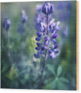 Lupine Blues Wood Print