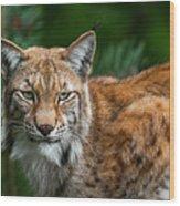 Lynx Wood Print