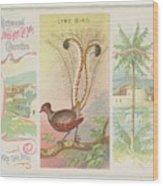 Lyre Bird Wood Print