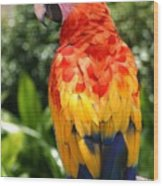 Macaw Sitting On A Branch Wood Print