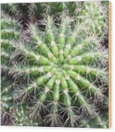 Macro Of Succulent Plant In The Desert Wood Print