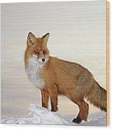 Majestic Fox Wood Print