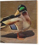 Male Mallard - Painted Wood Print