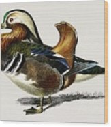 Mandarin Duck  Aix Galericulata Illustrated By Charles Dessalines D' Orbigny  1806-1876 1 Wood Print
