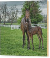 Mare And Foal 2 Wood Print