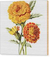 Marigold Flower Wood Print