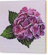 Maroon Hydrangea Wood Print