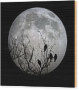 Midnight Moonshiners  Wood Print