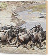 Migration, Group Of Gnus Crossing Mara Wood Print