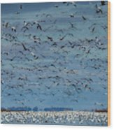 Migration Of The Snow Geese Wood Print