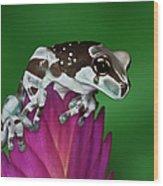Milk Frog, Trachycephalus Resinifictrix Wood Print