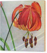 Moment in the Sun - Lily Wood Print