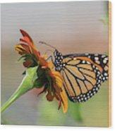 Monarch 2018-28 Wood Print