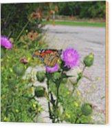 Monarch Butterfly Danaus Plexippus On A Thistle Wood Print