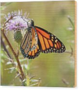 Monarch Butterfly On Thistle 2 Wood Print