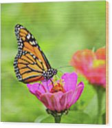 Monarch Butterfly Square Wood Print