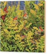 Monarch Gathering 1 Wood Print