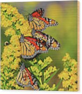 Monarch Gathering 2 Wood Print