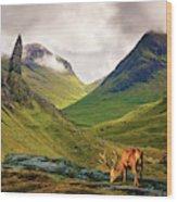 Monarch Of The Glen Wood Print
