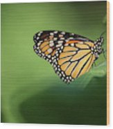 Monarch On Milkweed Wood Print