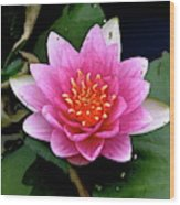 Monet Water Lilly Wood Print