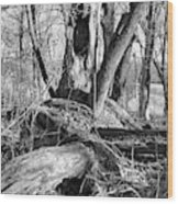Monochrome Woods 2 Wood Print