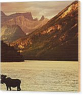 Moose In Lake With High Mountains In Wood Print