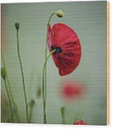 Morning Poppy Flower Wood Print