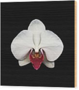 Moth Orchid Against Black Background Wood Print
