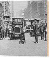Mother Cat Blackie Halts Traffic As She Wood Print