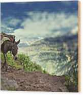 Mountain Donkey Wood Print