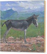 Mountain Donkey  Wood Print