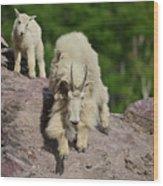 Mountain Goats- Nanny And Kid Wood Print