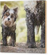 Muddy Little Dog Stands Next To A Muddy Wood Print