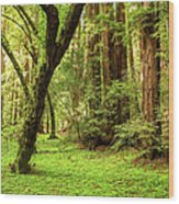 Muir Woods Forest Wood Print