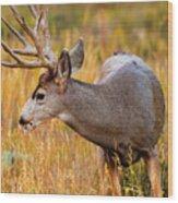 Mule Deer Buck In Rocky Mountain National Park Wood Print
