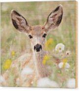 Mule Deer Fawn Lying In Wildflowers Wood Print