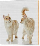 Munchkin Cats Wood Print