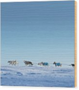 Mushing Alaska Wood Print
