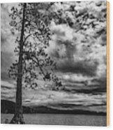 My Favorite Tree Black And White Wood Print