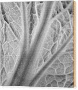 Napa Cabbage 2816 Wood Print