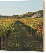 Napa Valley Vineyard In Autumn Wood Print