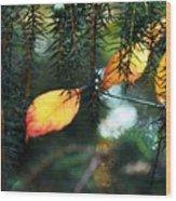 Nature's Glow Wood Print