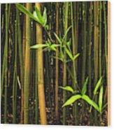 New Bamboo Shoot Wood Print