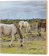 New Forest Ponies On The Heath Wood Print