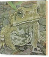 Noble Toad Wood Print